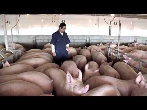 Thomas Livestock Tour