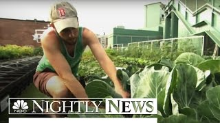 Fenway Farms: Boston Red Sox Go Green With Rooftop Garden | NBC Nightly News
