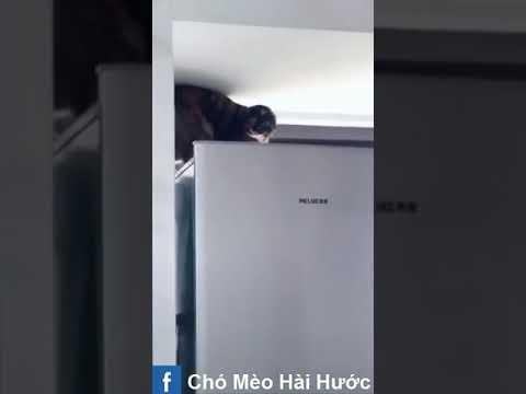 [Love TikTok] Pet Funny Best funny Dog Video Cat Funny 17