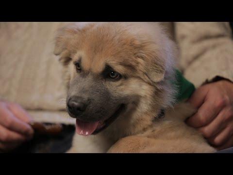 Puppy Bowl Adoption Tails: Boomer | Puppy Bowl XI