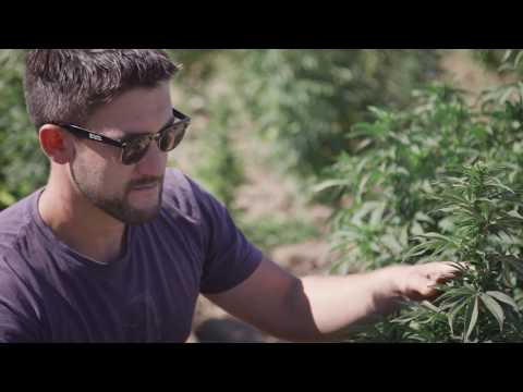 Building Lazarus Farms: Becoming Vertically Integrated
