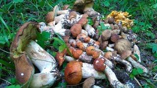 видео Белые грибы и подосиновики, Подмосковье Сентябрь 2017
