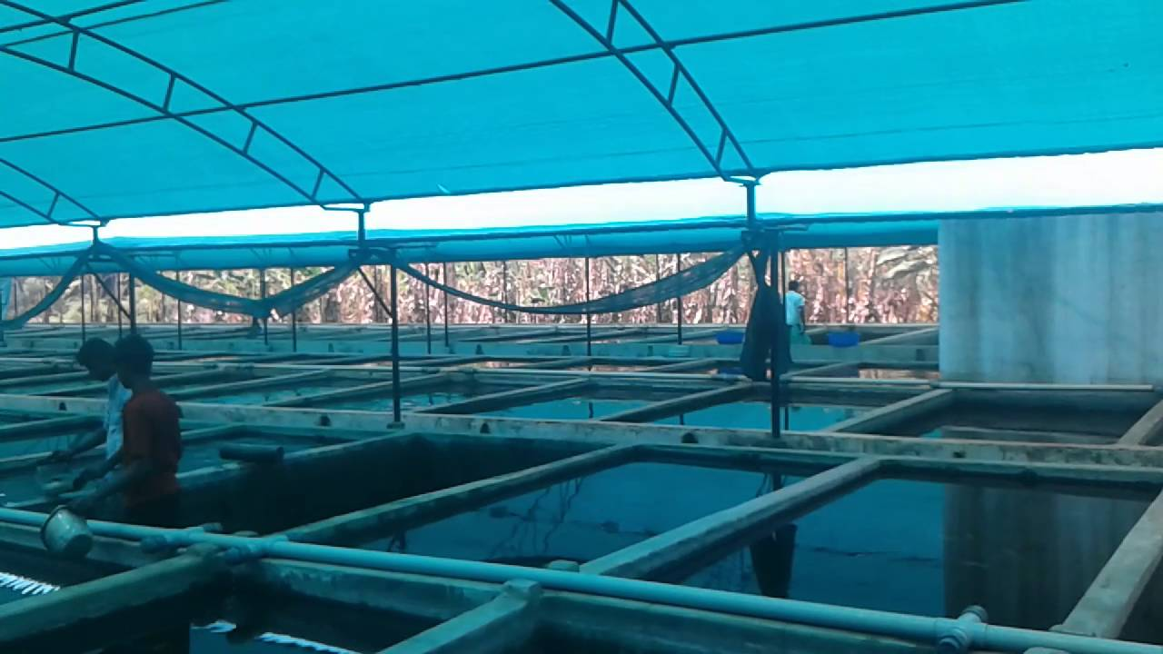Profitible Ornamental fish Farm - Ornamental fish Exports & Farming video