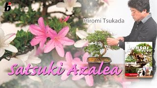 Can an azalea  be styled?