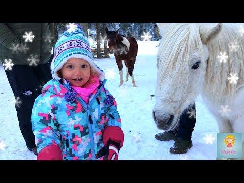 Гонки на санках - девочки против папы. Знакомимся с лесными маленькими лошадками.