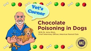 Chocolate Poisoning | Vet's Corner with Dr. Jerry Klein