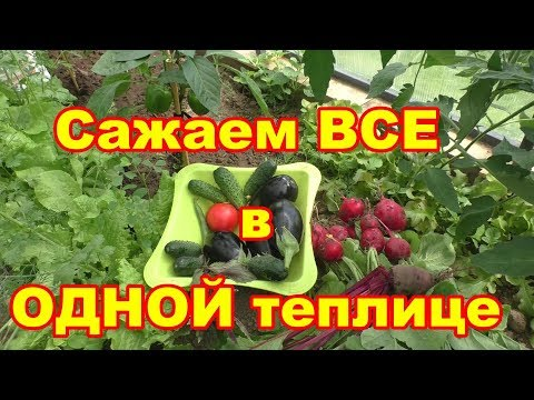 В конце мая все овощи собирем в одной теплице!