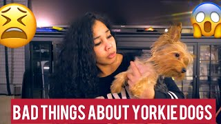 12 BAD THINGS ABOUT YORKIES  MUST WATCH!!