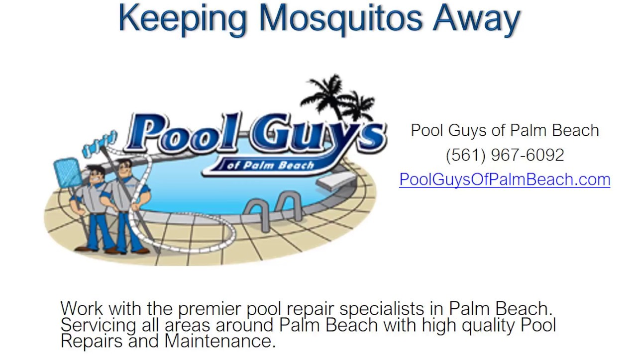 Guys Of Palm Beach Lake Worth Fl