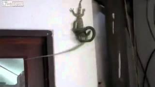 Война ящериц и змеи
