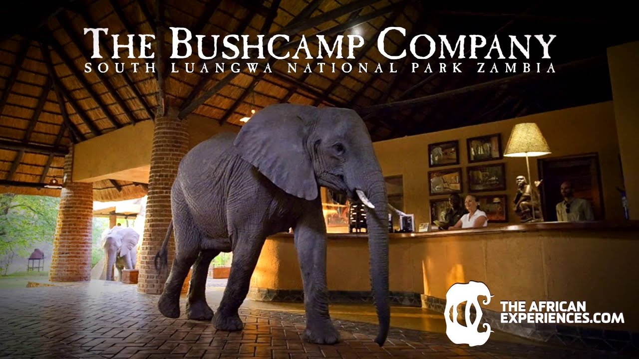 Zambia   Migración y elefantes