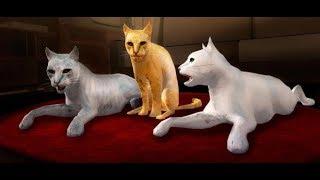 Мультфильм для детей — СИМУЛЯТОР КОШКИ —игры для детей/ Android gameplay FHD