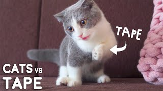 I Taped My Cats Paw Challenge!