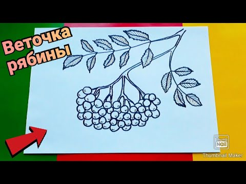 Как нарисовать ВЕТОЧКУ РЯБИНЫ ПОЭТАПНО,простые рисунки/How to draw a sprig of ROWAN in STAGES