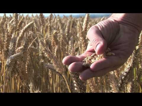 Texas A&M AgriLife: Solutions