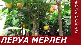 ЛЕРУА МЕРЛЕН  Обзор Цветов Ассортимент, Цены.