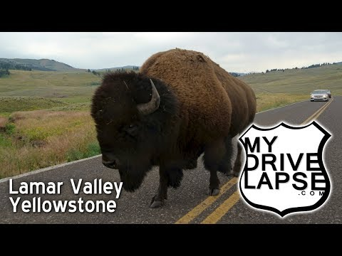 Lamar Valley, Land of Bison, Yellowstone