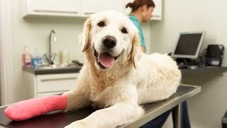 The Pros and Cons of Pet Insurance