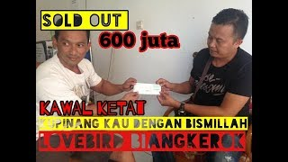 Video Lovebird #BIANGKEROK Di Pinang 600 Juta. download MP3, 3GP, MP4, WEBM, AVI, FLV Maret 2018
