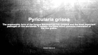Medical vocabulary: What does Pyricularia grisea mean