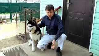 Как взвесить собаку, как измерить вес собаки / how to weigh the dog