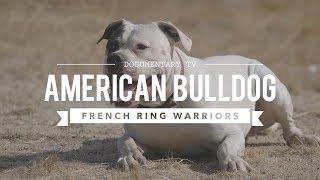 AMERICAN BULLDOGS NATURAL PROTECTORS