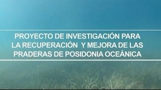 Proyecto de investigación para la recuperación y mejora de las praderas de posidonia oceanica
