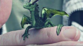 7 Dragones REALES Captados en Cámara