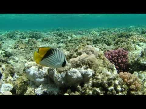 Tauchparadies Rotes Meerиз YouTube · Длительность: 28 мин58 с
