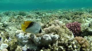Schnorcheln im Roten Meer - Teil 1
