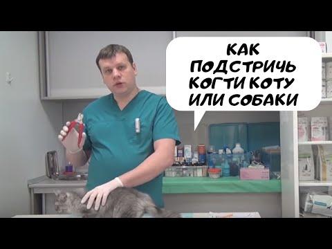 Как подстричь когти коту и собаке