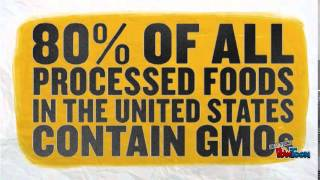 GMOs and Golden Rice