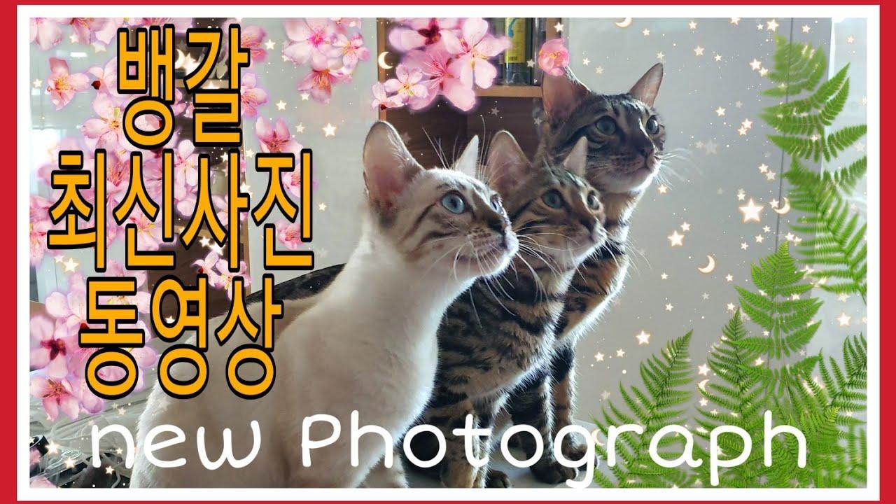 *꽁냥이네뱅갈* 최신사진과영상모음 babycats new photograph