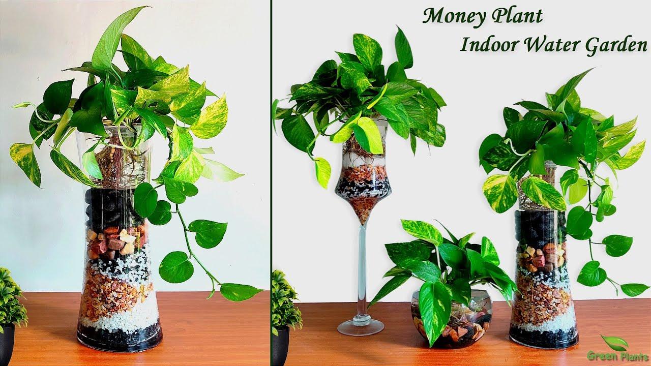 Money plants Growing in Water   Money plant Indoor Water Garden   Grow Plants in Water//GREEN PLANTS
