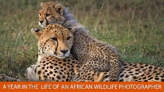 A Year in the Life of an African Wildlife Photographer with Andy Biggs