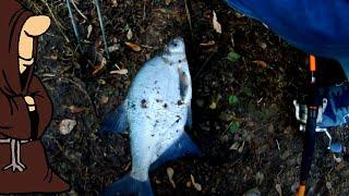 КАК ОБСТОЯТ ДЕЛА НА РЕКЕ Рыбалка в Ноябре с донками налим лещ