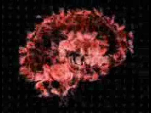 kram otak ~ Iwa K