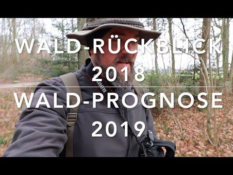 Wald-Jahresrückblick mit Prognose für 2019