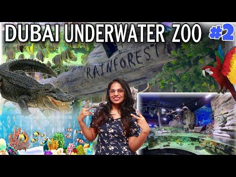 దుబాయ్ నీటి అడుగులో ZOO   అతి పెద్ద CROCODIAL    ఇది మిస్ అవ్వకండి    DUBAI UNDERWATER ZOO    Part 2