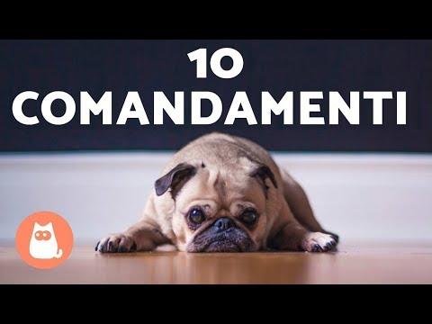 I 10 COMANDAMENTI dei cani 🐶 Sicuri di rispettarli? 😱