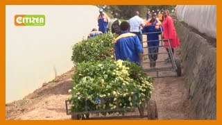 Flower farms in Naivasha send workers home