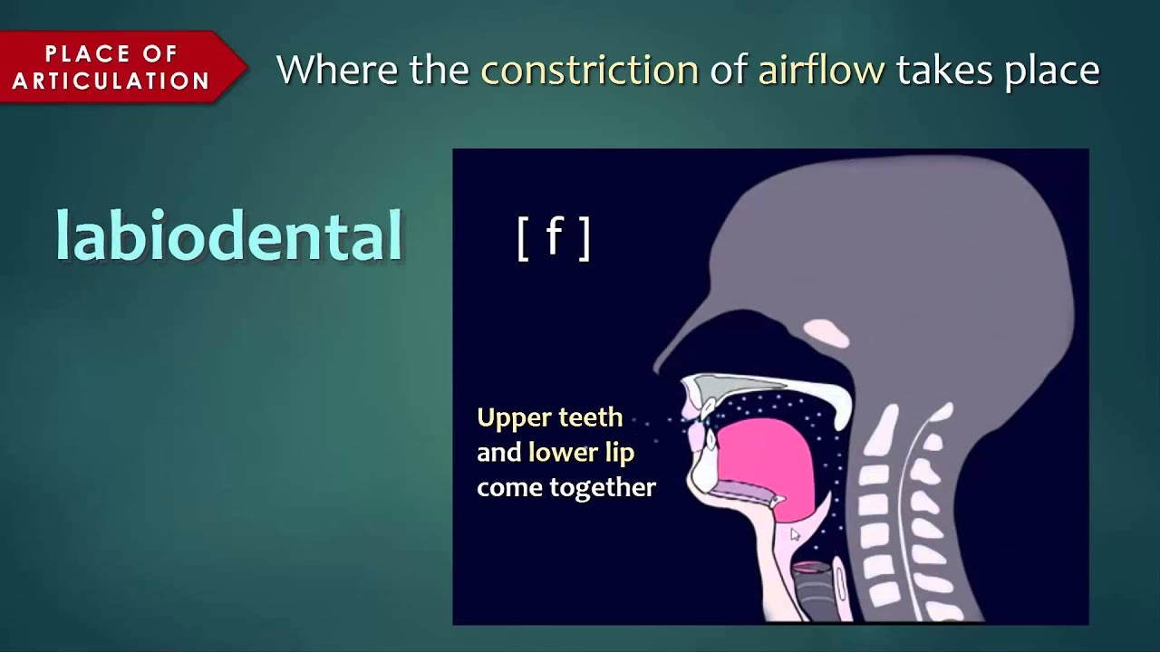 introduction to articulatory phonetics  consonants