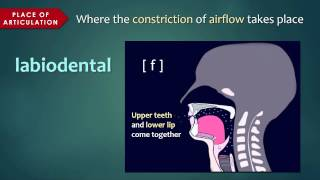 Introduction to Articulatory Phonetics (Consonants)
