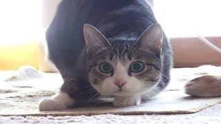 7 Fakta Kucing Yang Selama Ini Kita Tidak Ketahui !!! Pecinta Kucing Wajib Tau