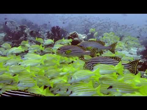 Diving in South Ari Atoll - Maldives 2016