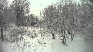 Охота с эстонской гончей на зайцев