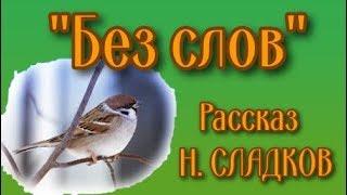 """Рассказ о воробьях """"Без слов"""" (Н. СЛАДКОВ)"""