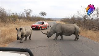Wildlife Live Stream Kruger Park Sightings and Animal Encounters
