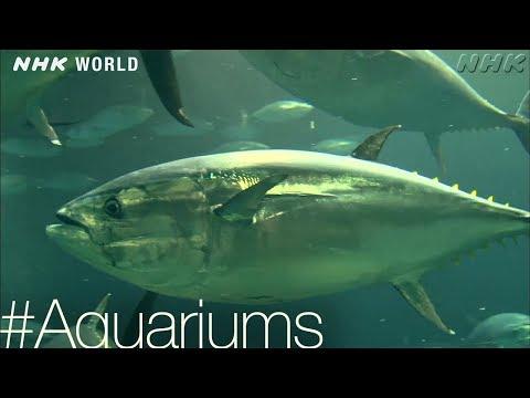 Too Much Tuna? [Aquariums] - #TOKYO [Japan]