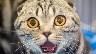 ТОП 5 самых смелых котов.